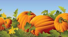 Annual Pumpkin Patch Festival – Saturday, October 14th