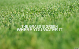 The Grass is Greener Where You Water: Let's Ascend!
